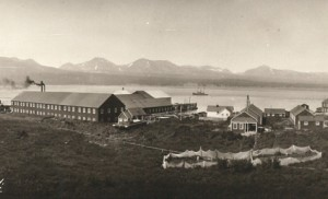 Alaska Packers Cannery, Chignik, Alaska, 1915. Photo courtesy of Anjuli Grantham.
