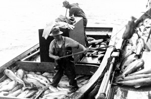 Fishermen peughing the catch, location and year unknown.